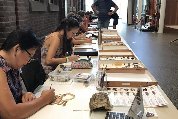 Illustrators sitting at a long table drawing specimens